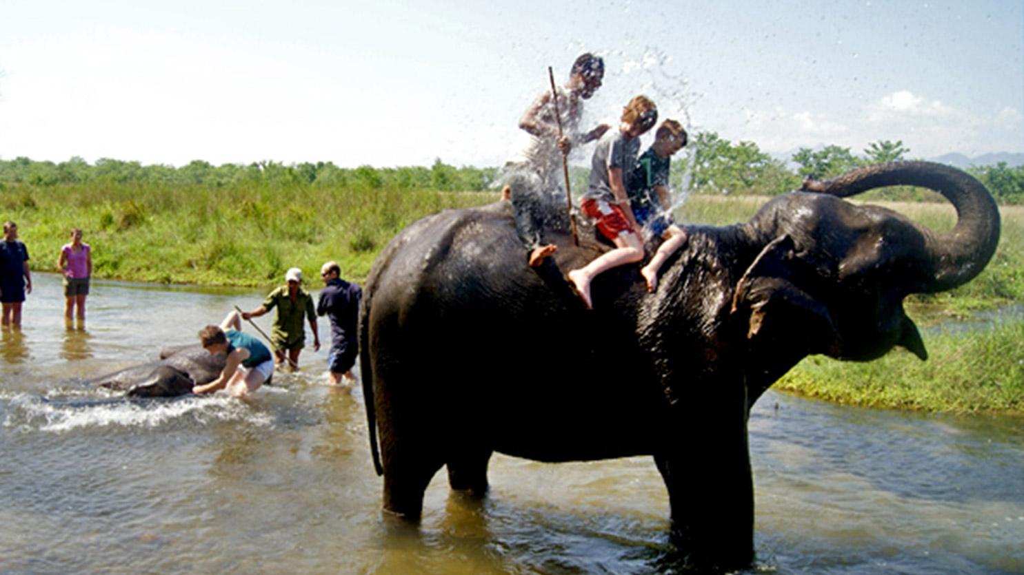 Le bain des éléphants, parc national du Chitwan - Passez d'incroyables moments au Népal :)
